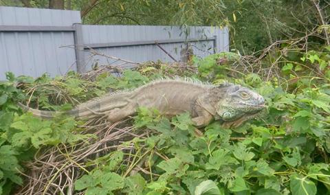 Намоєму городі під Києвом динозавр!